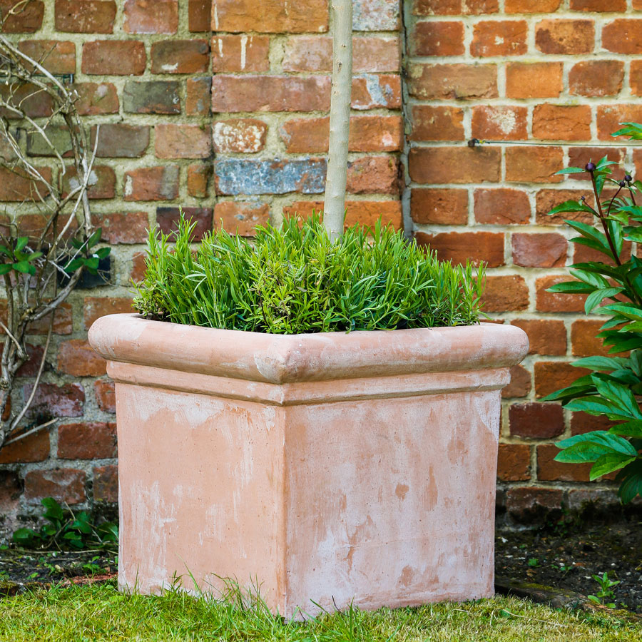 terracino bay tree square garden planter - greenart